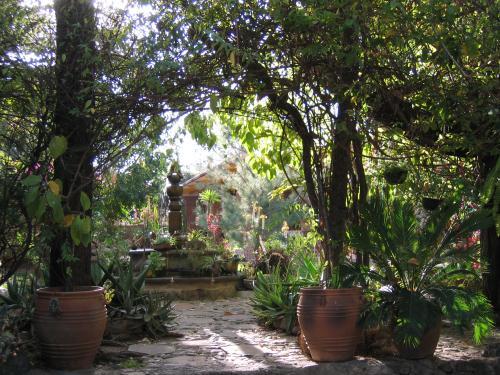 Garden at Casa Linda